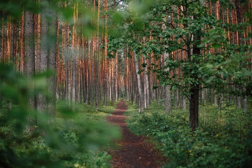 Forests of Lithuania