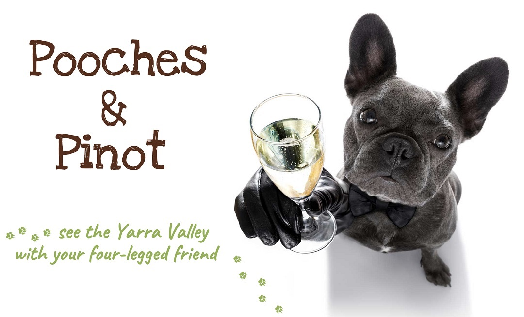 Dog-Friendly Wine Tasting Tours of Yarra Valley with Pooches & Pinot