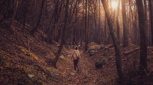 Walker walking alone in the bush