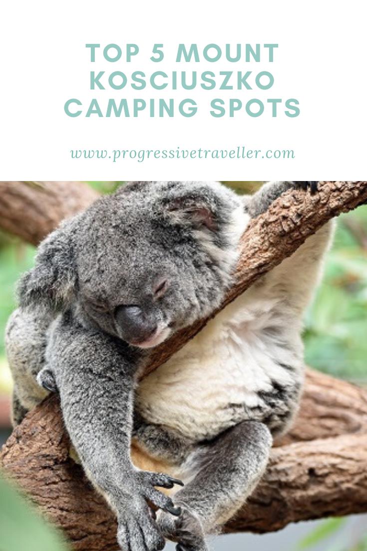 Sleeping Koala in a gum tree