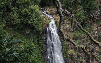 Morans Falls Track, Morans Falls Lamington National Park