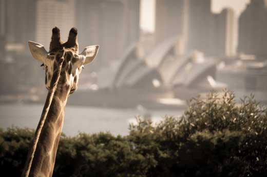 Sydney road trip