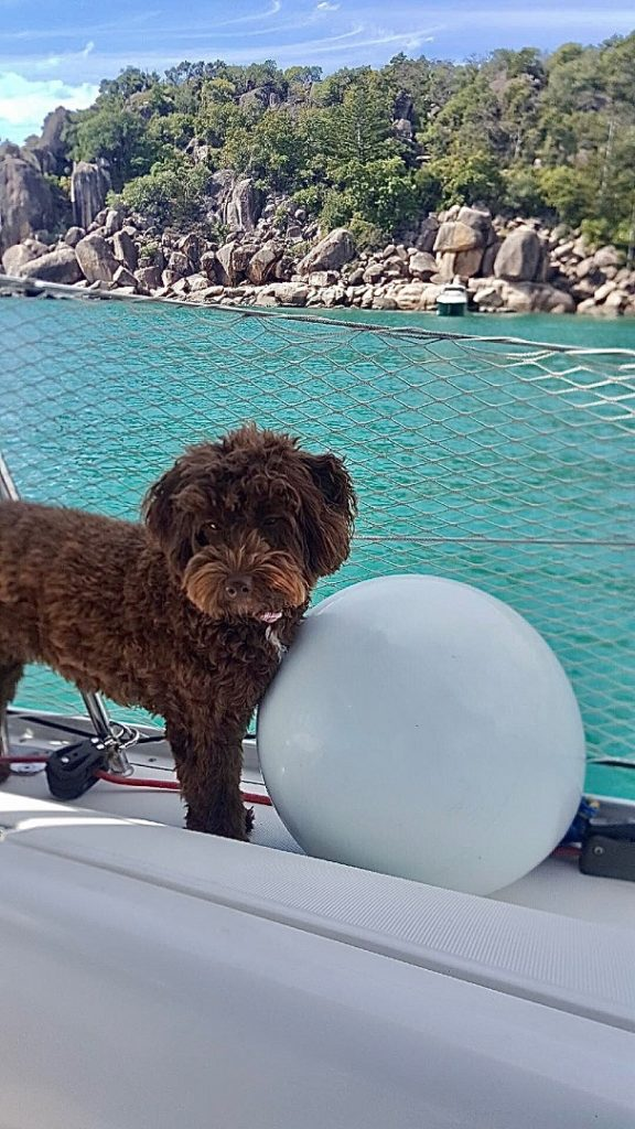 Dog Onboard | Sailing with A Dog