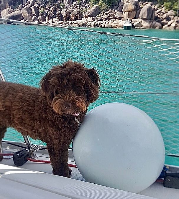 5 Tips You Must Know Before Boating with Dogs