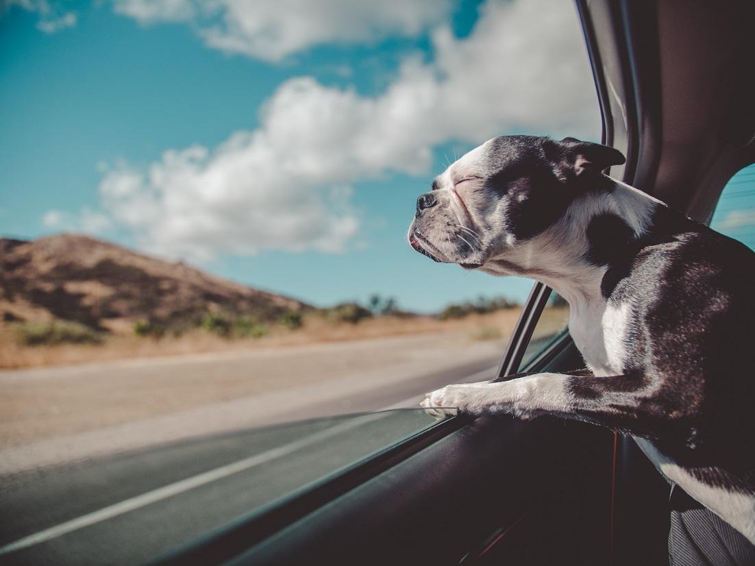 Pet Car Rentals